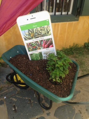 iphone in a wheelbarrow with plants